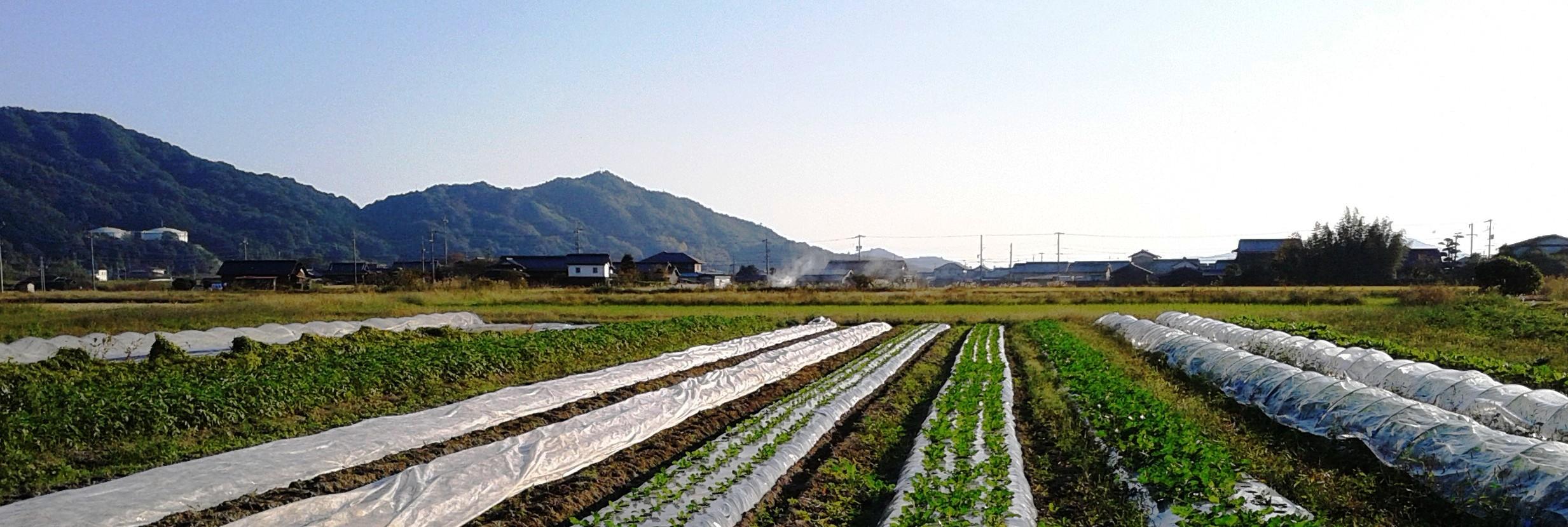 完全無肥料無農薬の自然栽培を極める